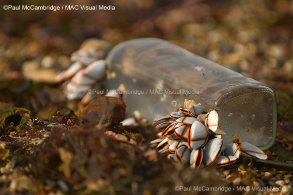 Johny Walker and Mussels 05a web