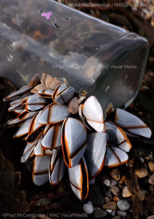 Johny Walker and Mussels 07b web